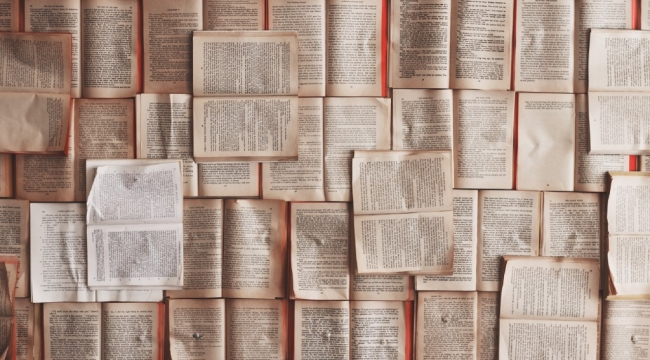 Novella nedir?
